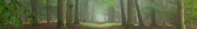 cropped-woodheader.jpg