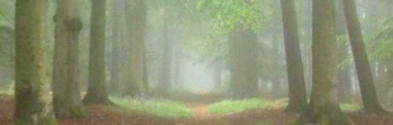 cropped-cropped-woodheaderexpoundtheme.jpg