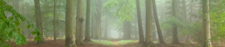 woodheaderexpoundtheme